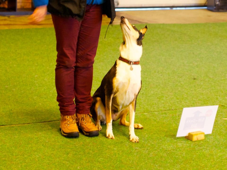 Innlandet Hundesenter, Ebbie